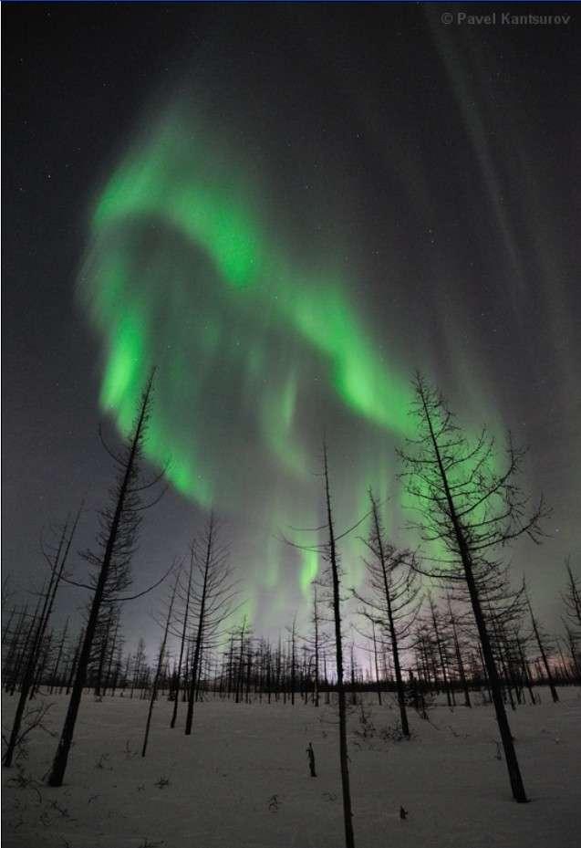 Aurore boréale du 22 janvier depuis le nord de la Russie. © Pavel Kantsurov