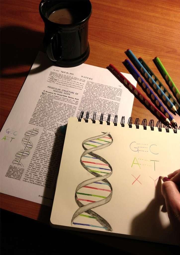 Les étudiants en biologie devront revoir leurs classiques et intégrer l'idée que l'ADN peut comporter de nouveaux couples de base… © Synthorx