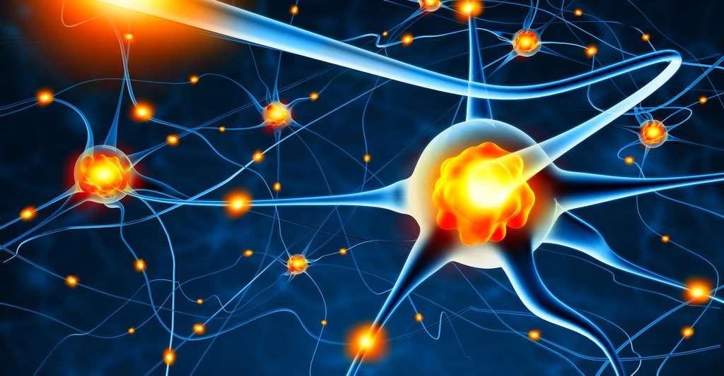 L'étude des PEA analyse le bon fonctionnement du nerf auditif. © Adimas, Fotolia