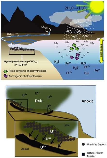 Le schéma proposé pour expliquer l'apparition de réacteurs nucléaires naturels à faibles profondeurs, le long des côtes. Avant la période de l'oxygénation des océans et de l'atmosphère (image du haut), l'uraninite (UO2), produite par les éruptions volcaniques puis emportée par les cours d'eau, s'est accumulée sur les continents, dans des lacs et dans les estuaires où ce minerai lourd se retrouvait au fond (sorting). Pendant ce temps, dans l'atmosphère, les réactions de photolyse produisaient de l'eau oxygénée (H2O2). Dans l'océan, cette pluie a enrichi en oxygène les couches superficielles des océans. Cet apport d'O2 a réduit la quantité fer (Fe2+) et de molécules, comme le sulfure d'hydrogène (H2S), qui servaient aux micro-organismes réalisant la photosynthèse sans émission d'oxygène (anoxygenic photosynthesizer). Ce qui a favorisé les organismes qui, eux, réalisaient la photosynthèse en utilisant l'eau et en rejetant de l'oxygène (proto-oxygenic photosynthesiser). Quand la teneur en oxygène a augmenté (image du bas) et là où elle était plus importante (oxic), l'uraninite s'est plus facilement dissoute dans l'eau (U6+) pour aller se déposer aux marges de ces zones oxygénées (anoxic). Cet apport d'uraninite a migré dans le sédiment et s'est accumulé. La teneur en 235U, plus forte à l'Archéen qu'aujourd'hui, permettait d'atteindre les conditions critiques pour le déclenchement de réactions nucléaires (Natural Fission Reactor). © Laurence Coogan et Jay Cullen / GSA Today