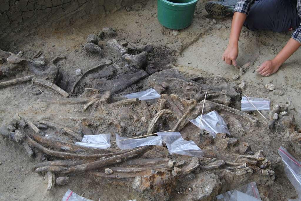 Les fouilles sur l'île de Luzon, en Indonésie, vont-elles nous en apprendre plus sur les origines de l'Homme ? © Thomas Ingicco, Mission archéologique Marche (Meae)