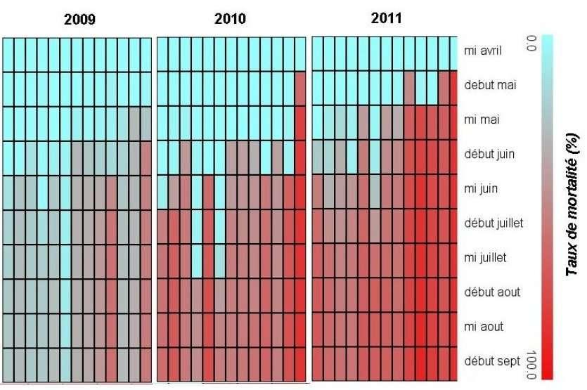 Comparaison de l'apparition et de l'intensité des mortalités sur les sites de l'Observatoire conchylicole sur la période 2009- 2011 (référence : naissain de captage Arcachon). D'après Édouard Bedier, (Les surmortalités des naissains d'huîtres creuses Crassostrea gigas, Les rencontres de l'Ifremer, janvier 2012).