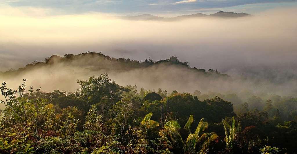 L'art rupestre de Bornéo est-il lié à des rituels ? Ici, de la brume au-dessus des forêts et grottes de Bornéo. © Labanglonghouse, DP