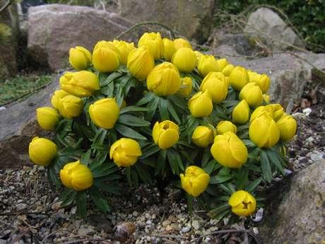 10 bulbes rares à cultiver. © DR