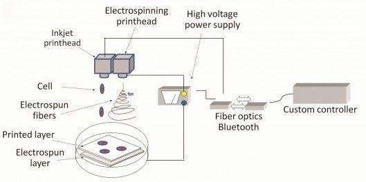 Ce schéma reprend le principe de fonctionnement de l'imprimante 3D de cartilage. Derrière sa console (Custom controller), l'utilisateur personnalise sa production. Le signal est envoyé via Bluetooth ou fibre optique à deux têtes d'impression. D'abord, un générateur électrique (High voltage power supply) stimule la tête d'impression à électrofilage (Electrospinning printhead) pour qu'elle synthétise un squelette en fibres de polymères (Electrospun fibers). Cette structure passe sous la tête d'impression à encre (Inkjet printhead). Elle contient des cellules de cartilage (Cell) qui vont occuper les trous. Couche après couche, la structure prend forme. © Institute of Physics