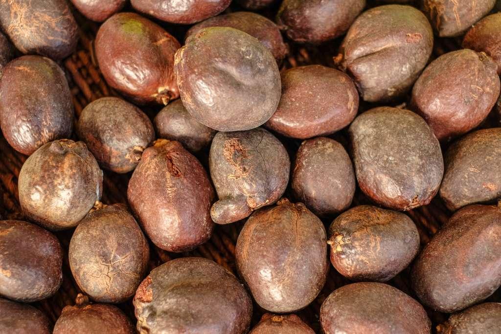 Les fruits de Doum étaient sacrés dans l'Égypte antique. © serdar, Adobe Stock