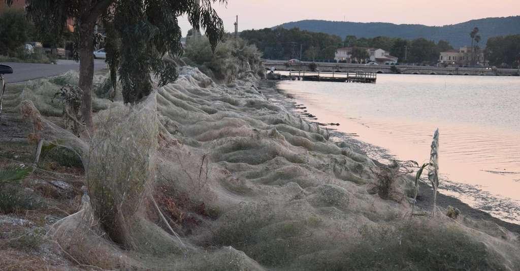 Ces toiles n'ont pas été tissées par des araignées géantes, mais par des milliers d'araignées rassemblées là pour «faire la fête». © Giannis Giannakopoulos, Facebook