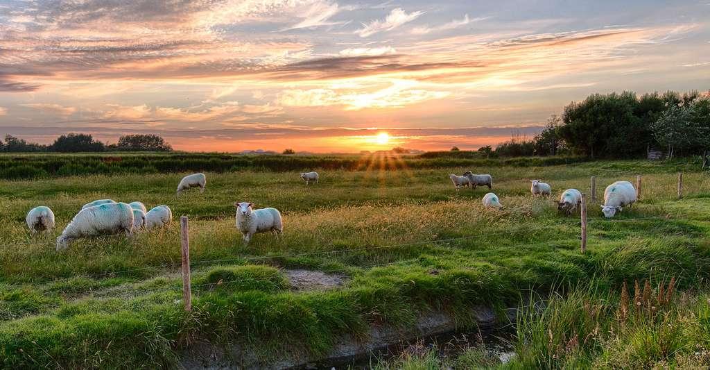 Coucher de soleil sur le marais poitevin. © Fuzzybaer, Pixabay, DP