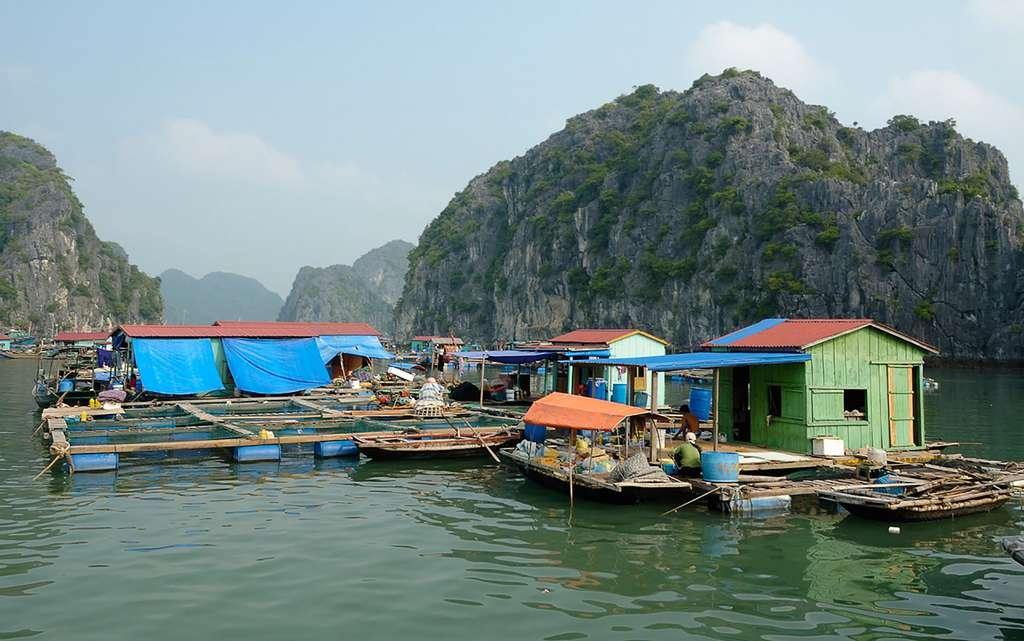 Ferme piscicole au Vietnam, un pays qui produit 20 fois plus de poissons que la France. © Christophe Meneboeuf, Wikimedia commons, CC 3.0