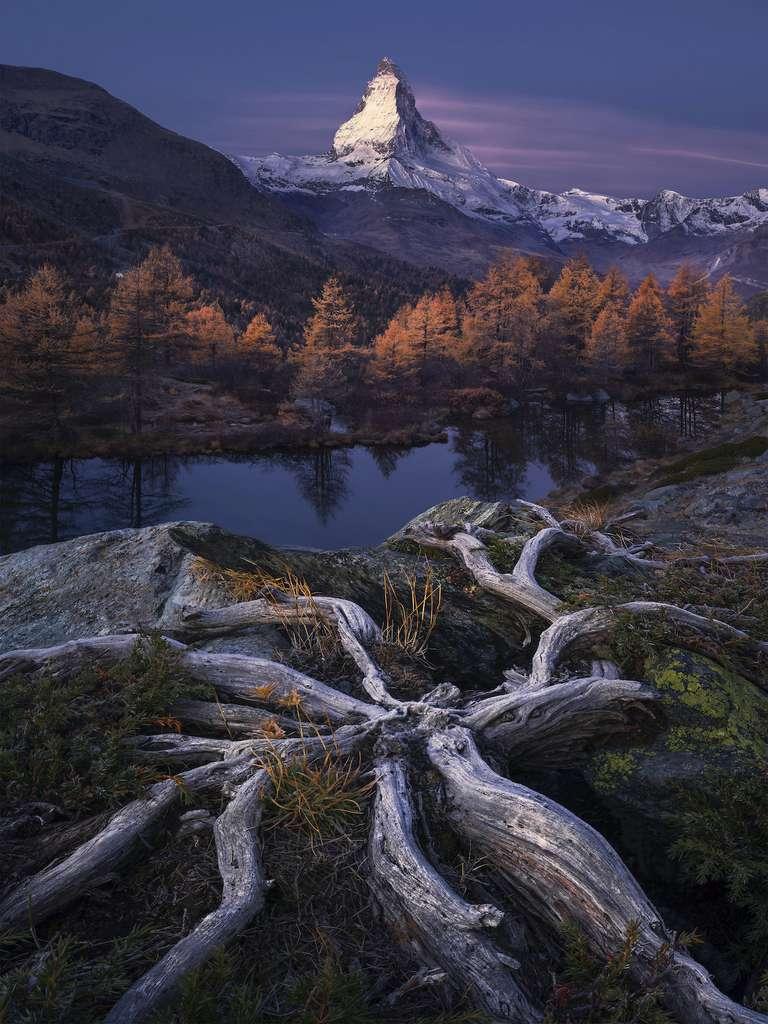Racines de l'éternité ; le Matterhorn, vu de Grindjisee ; Zermatt, Valais, Suisse