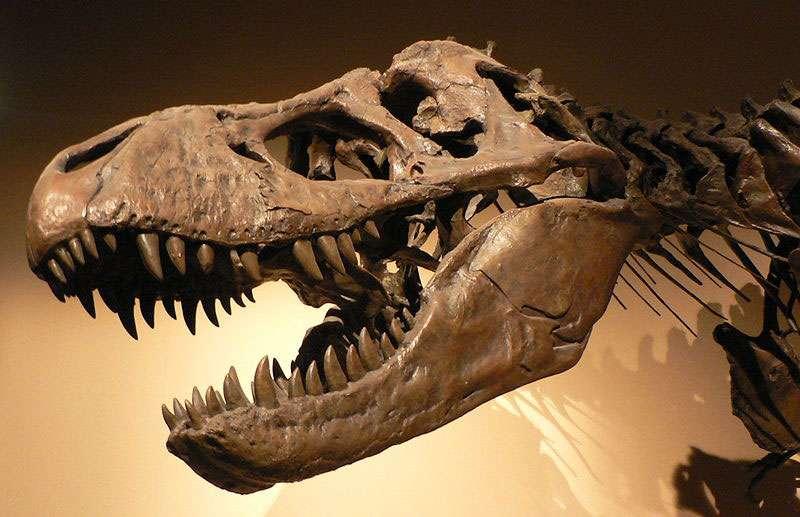 Tyrannosaurus rex, Palais de la Découverte, Paris. © 2005 David Monniaux, licence Creative Commons Paternité – Partage des conditions initiales à l'identique 3.0 Unported