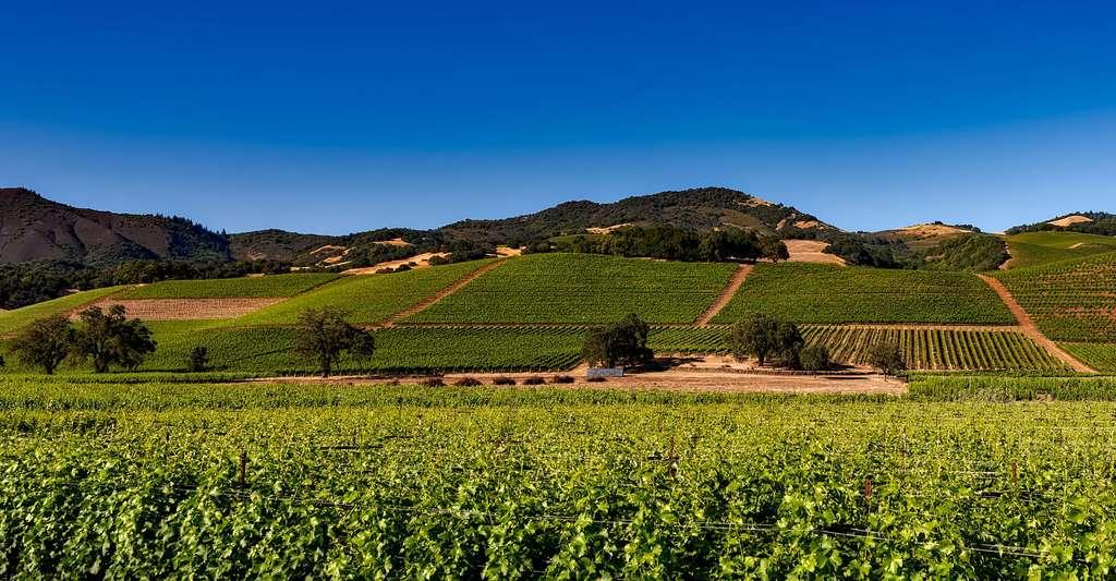 Qu'est-ce que la chimie du vin ? Ici, des vignes en France. © Tpsdave CCO
