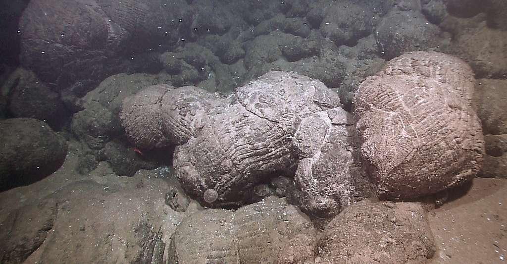 Formation de laves appelées pillow lavas. © NOAA Okeanos, Wikimedia commons, CC by 2.0