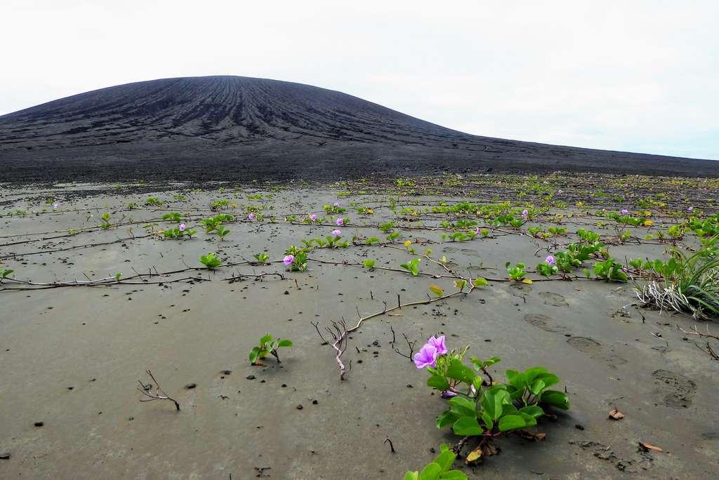 La végétation s'est déjà installée, de façon limitée, sur la nouvelle île tongolaise Hunga Tonga-Hunga Ha'apai. Des ravines creusées par les précipitations déchirent les flancs du cône volcanique en arrière-plan. © Dan Slayback