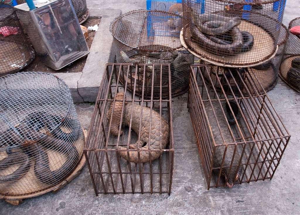 Vente illégale d'animaux sauvages. © Dan Bennett, Wikimedia commons, CC 2.0