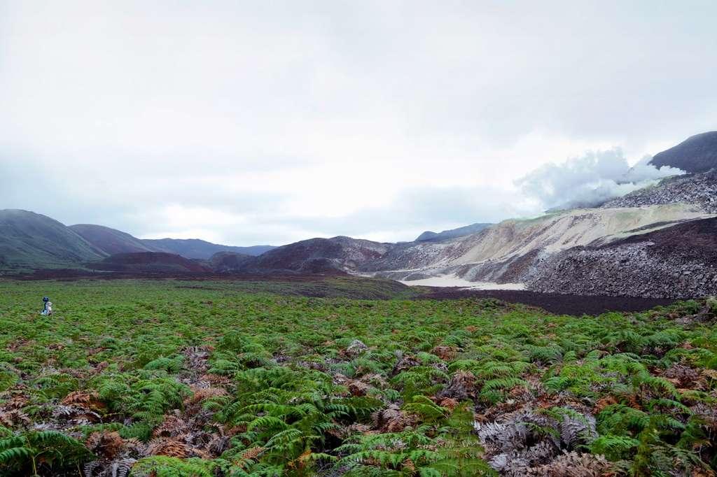 Daniel Orellana, de la fondation Charles Darwin, traverse un champ de fougères pour atteindre Minas de Azufre, une mine naturelle de soufre sur le sommet de la Sierra Negra, un volcan actif sur l'île Isabela. © Google
