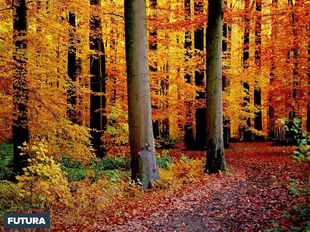 Vue automnale de la forêt de Soignes - Belgique