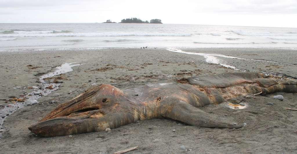 Les éruptions solaires seraient l'une des causes des échouages de baleines sur nos plages. © Markus, Adobe Stock