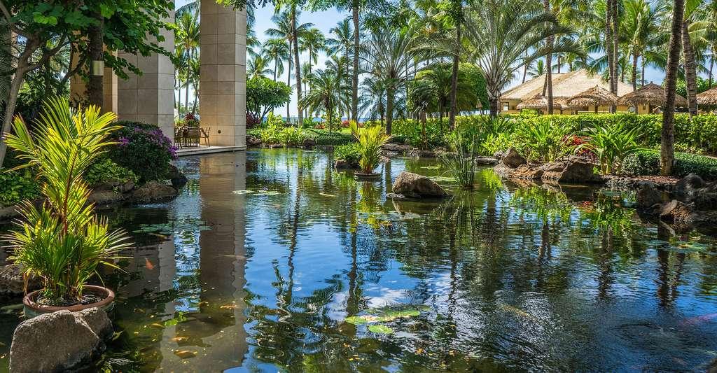 Chaque piscine naturelle est unique. © Mariamichelle, CCO