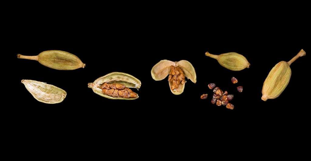 Capsules et graines de cardamone. © Didier Descouens, Wikimedia commons, CC by-sa 4.0
