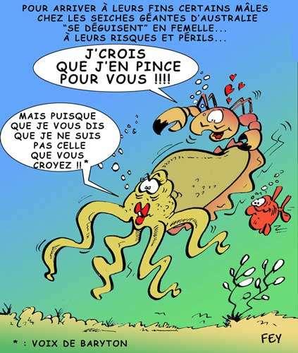 © Fey- Gueules d'Humour pour Futura-Sciences