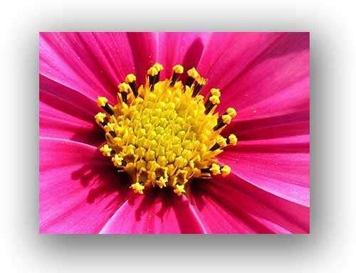 Cliquez pour percer les secrets des plantes et du nombre d'or. © Marciel Besnier