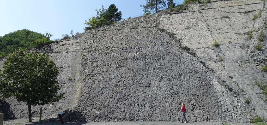 Vue d'ensemble de la dalle aux ammonites de Digne. Les plus grands spécimens sont visibles à cette échelle. © Banco de Imagenes Geologicas, Flickr