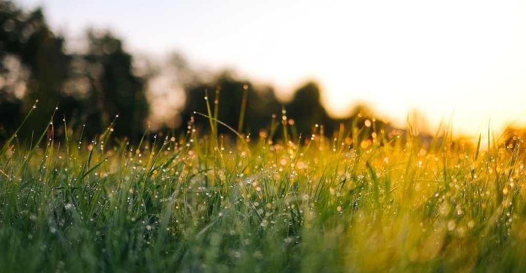 Une étude montre que la plantation d'arbres et l'amélioration de la gestion des prairies, des terres agricoles et des zones humides pourraient piéger 21 % des émissions annuelles de gaz à effet de serre des États-Unis à un coût relativement bas. © Jonas Weckschmied, Unsplash