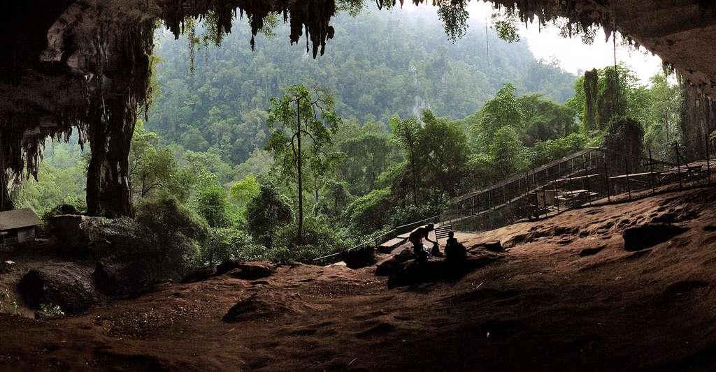 Bornéo est l'île des découvertes archéologiques. Ici, l'entrée d'une grotte. © Starlightchild, CC by-sa 3.0