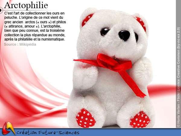 Arctophilie - ours en peluche