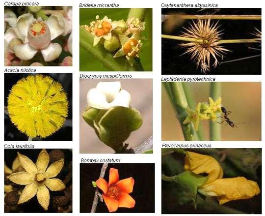 La fleur, le premier organe de mobilité des plantes © Photo Philippe Birnbaum - Tous droits de reproduction réservés
