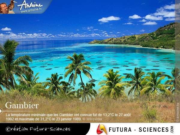 Les îles Gambier