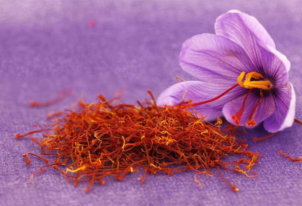 La culture du safran offre une double récompense : la fleur de couleur mauve qui s'épanouit à l'automne et la précieuse épice obtenue avec ses stigmates rouges. © Viperagp, Adobe Stock