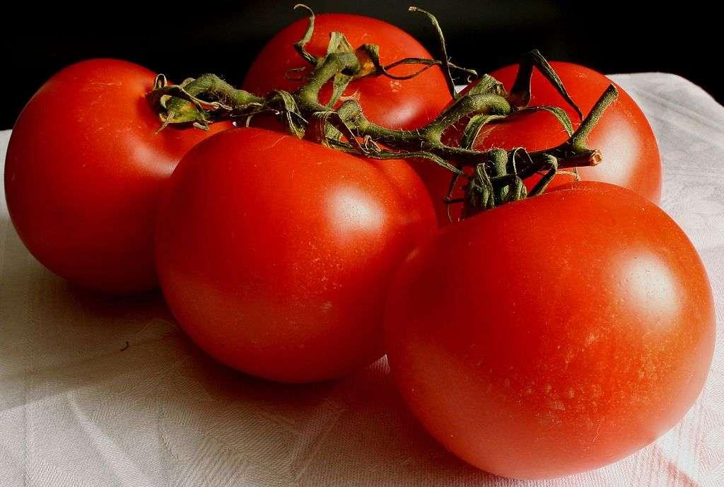 La recherche sur de nouvelles variétés de tomates continue. La tomate Flavr Savr a été la première plante génétiquement modifiée validée pour la consommation humaine à être commercialisée, en 1994. © Hedwig Storch, CC by-sa 3.0