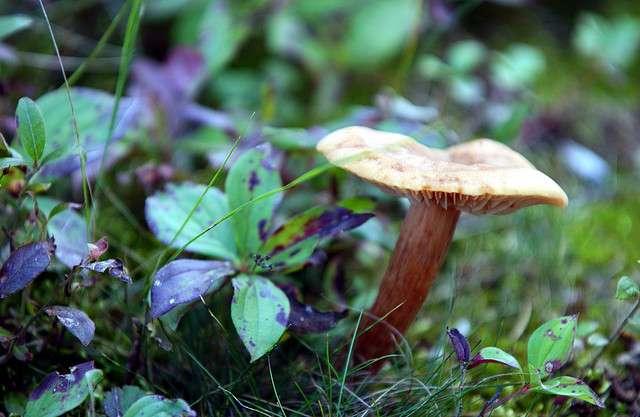 Parmi les champignons les plus classiques, certains se démarquent par leur forme et leur couleur peu communes ! © Peupleloup, Flickr, CC by-sa 3.0