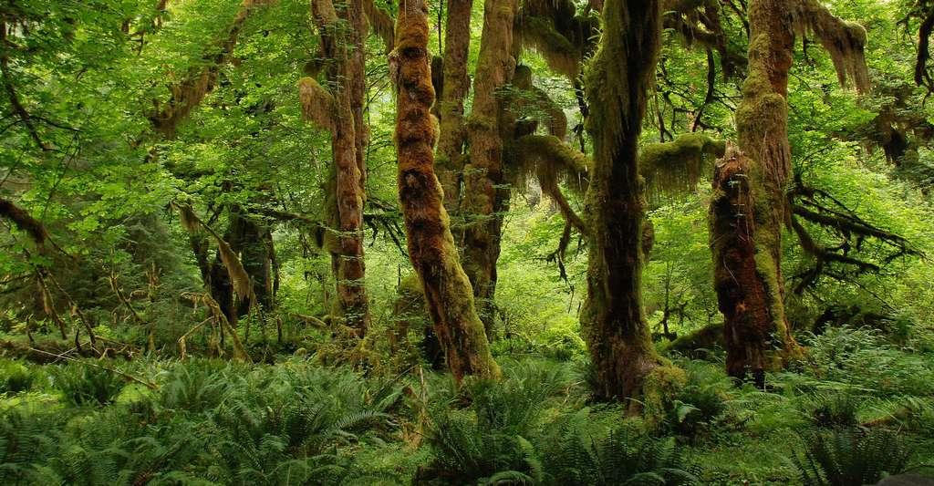 Forêt tropicale, une richesse pour la biodiverstié. © MrsBrown, Pixabay, DP