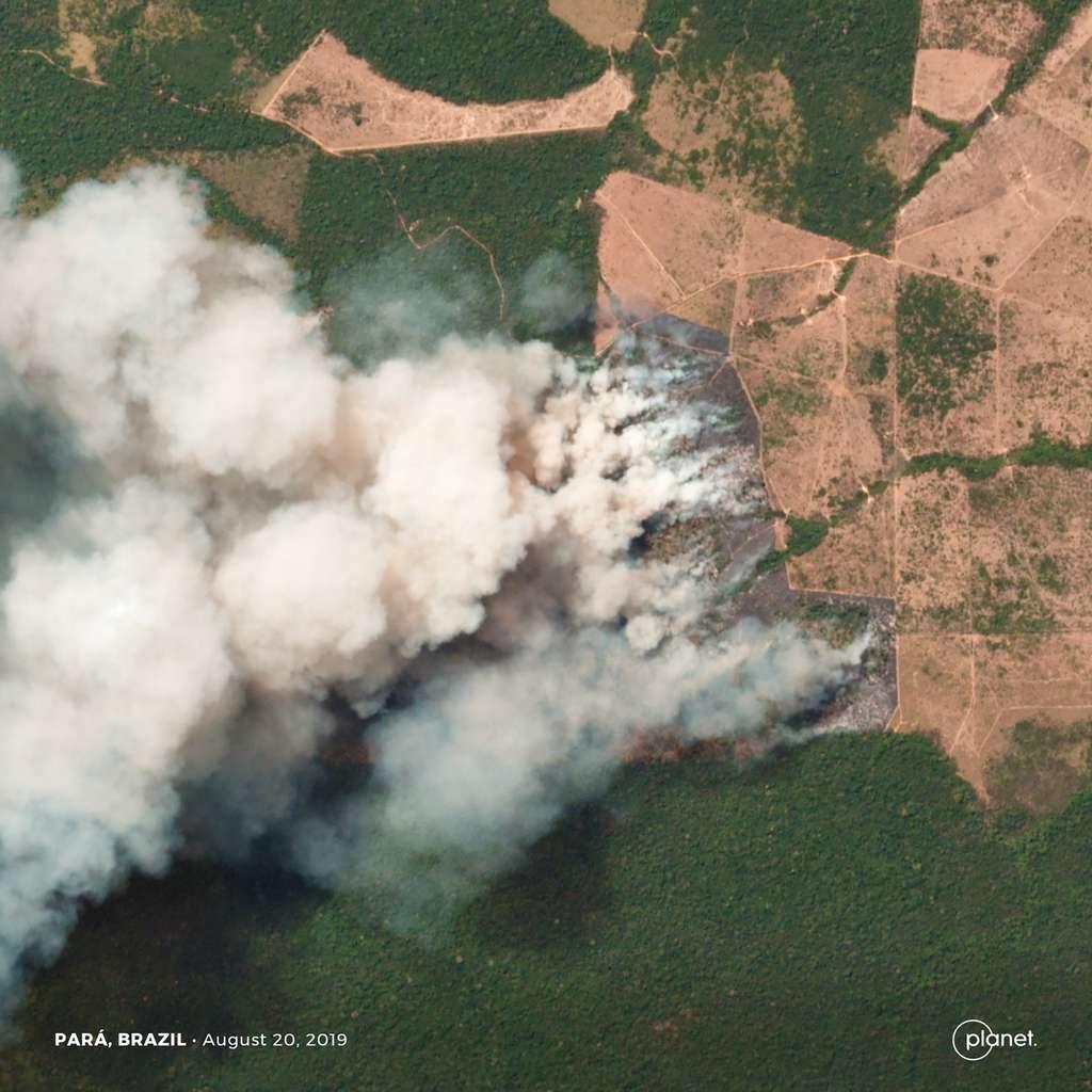 Cette année, les incendies au Brésil ont été particulièrement importants. En image, des zones forestières, agricoles et d'élevage dans l'État du Pará. © 2019 Planet Labs, Inc.