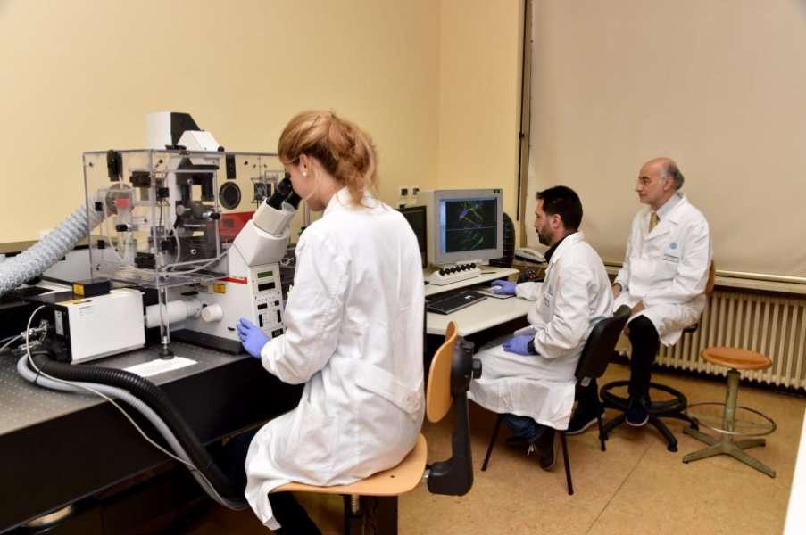 Claudio Grassi (à droite) et son équipe ont travaillé sur les effets de l'électrostimulation cérébrale sur les souris. © Docteur Claudio Grassi