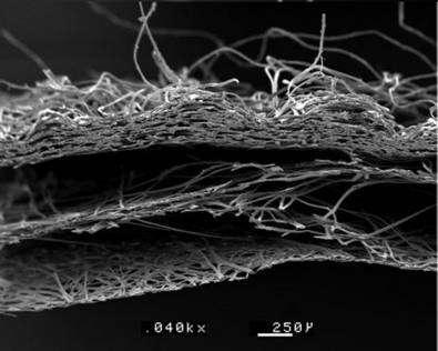 Coupe transversale d'un cocon représentant les différentes couches de bave constituant la coupe transversale (selon l'épaisseur) du cocon. Grossissement 40X. Cette bave est constituée de 2 brins de fibroïne (protéine) entourés par un ciment appelé grès donnant ainsi de la soie grège. © Gérard Coste Ingénieur EFPG
