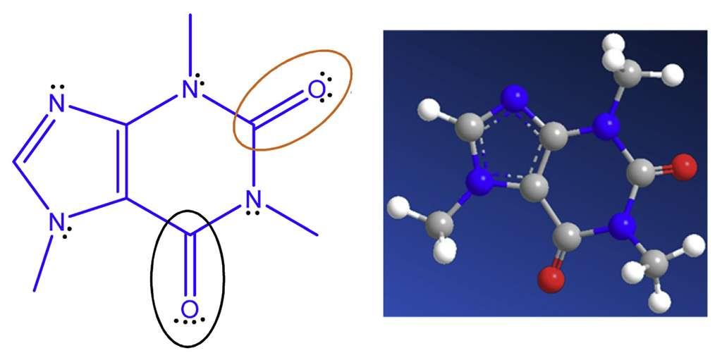 Les groupes carbonyle de la caféine se lient avec les atomes de plomb, ce qui ralentit le mouvement des ions dans le cristal de pérovskite et prévient sa dégradation. © Rui Wang et al, Joule, 2019