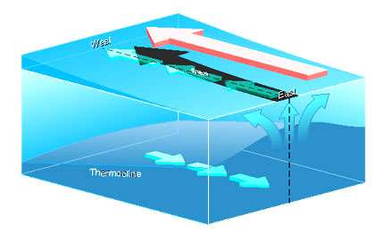 Figure 6 Les vents d'est (flèche rouge) entraîne l'eau de surface vers l'ouest le long de l'équateur. La rotation de la Terre dévie ce courant vers le nord dans l'hémisphère nord et vers le sud dans l'hémisphère sud, écartant les eaux de l'équateur et les remplaçant par de l'eau issue de couches plus profondes (flèches vers le haut). De plus, les vents provoquent l'accumulation des eaux dans la partie ouest du pacifique. Parce que l'eau plus chaude est moins dense, le niveau de la mer est plus élevé dans la partie ouest du bassin que dans la partie est, où les vents soufflent à pleine puissance. La thermocline qui marque la limite entre les eaux chaudes de surface et les eaux froides plus profondes (bleu foncé) est incliné. Elle affleure la surface dans le Pacifique équatorial oriental.