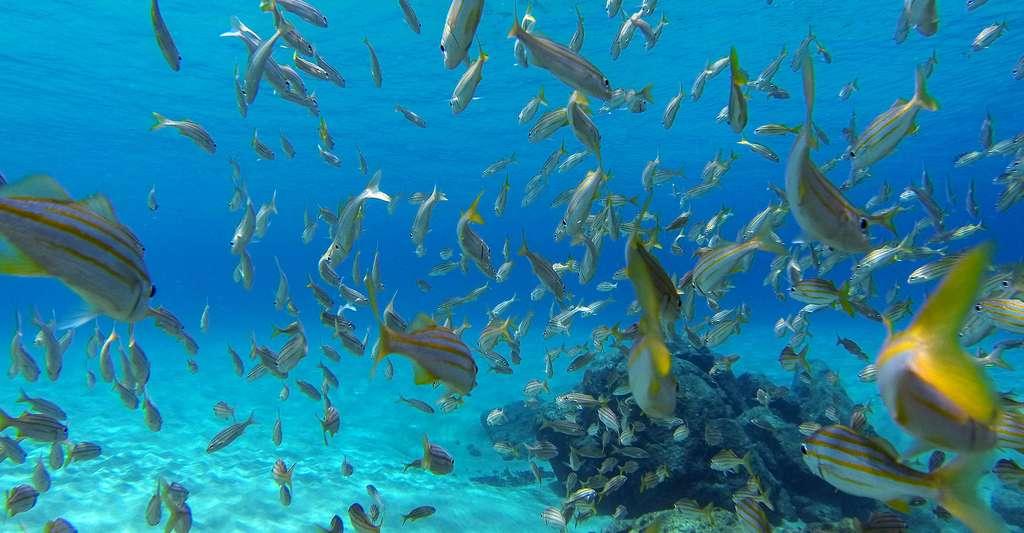 L'aquaculture pourra-t-elle nourrir l'humanité ? © CCINTRA, CC BY-SA 3.0