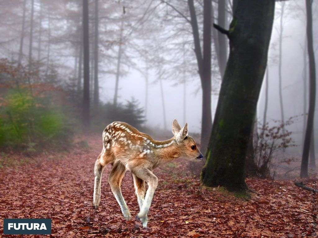 Faon dans la forêt d'automne