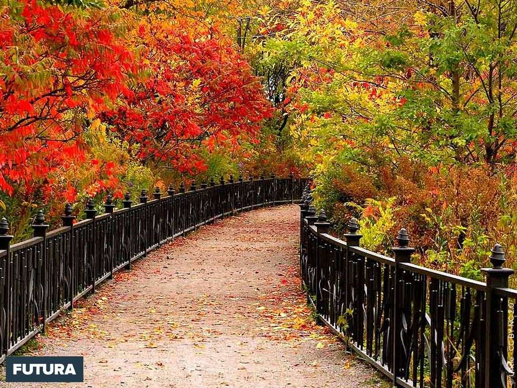 L'automne couleurs flamboyantes