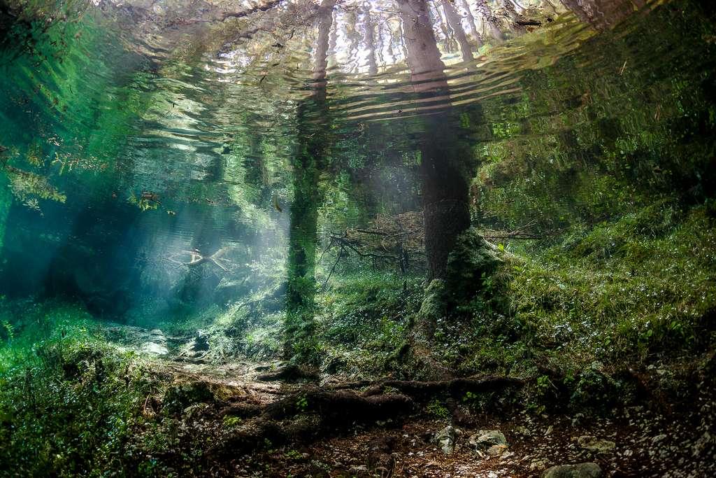 La forêt enchantée du lac Vert