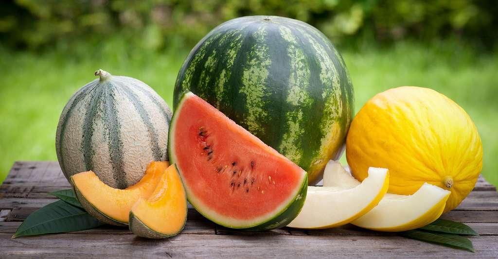 Pastèque, melon… © Christian Jung, Shutterstock