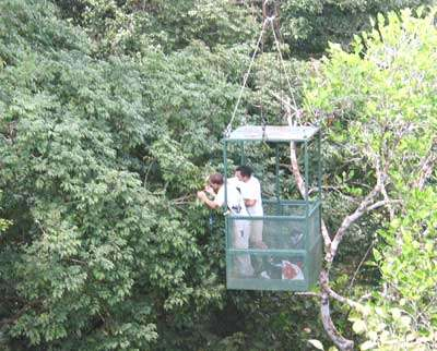 Vue de la canopée - Copyright Projet Ibisca - Tous droits réservés
