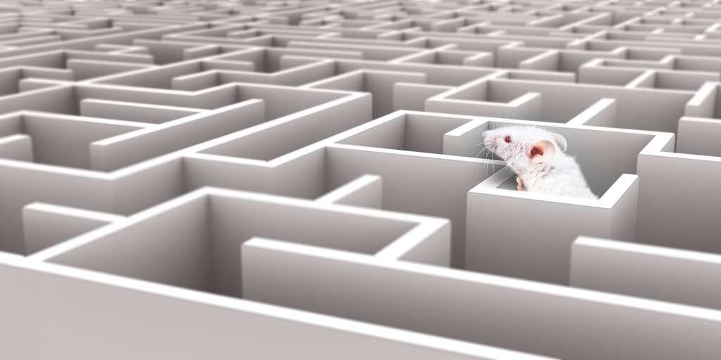 Les chercheurs utilisent des labyrinthes pour tester les capacités cognitives des souris. © neillockhart, Fotolia