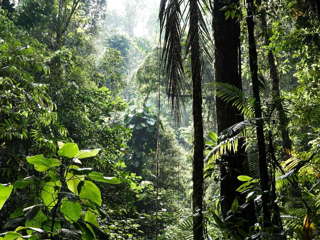 La forêt tropicale actuelle est dominée par les fougères et les plantes à fleurs. © Alenka Skvarc, Unsplash