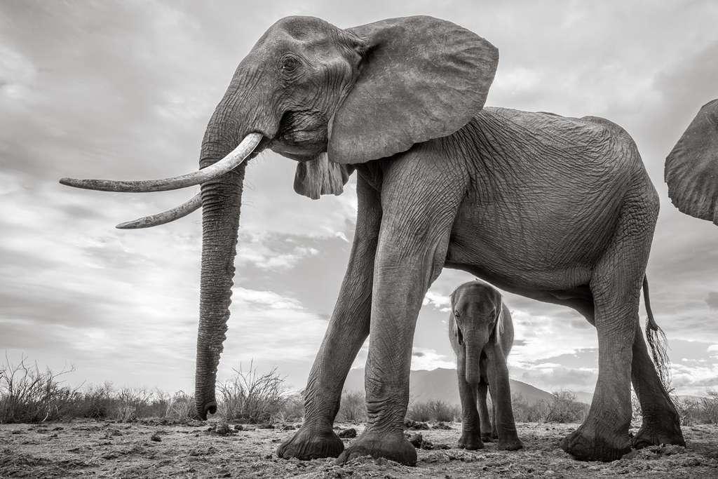 L'éléphanteau, mignon et fragile